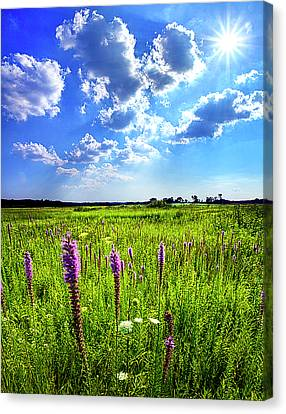 Summer Day Canvas Print by Phil Koch