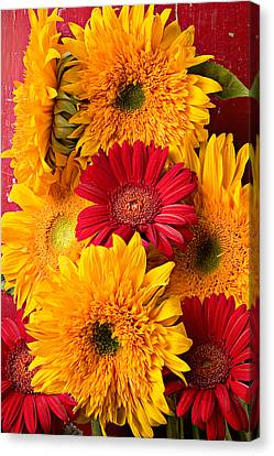 Sunflowers And Red Mums Canvas Print by Garry Gay