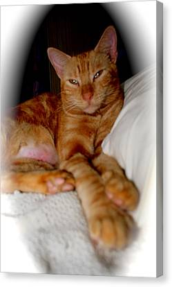 Canvas Print featuring the photograph Tabby by The Art of Alice Terrill