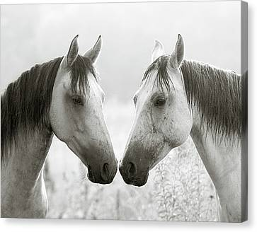 Grey Horse Canvas Print - The Greys by Ron  McGinnis