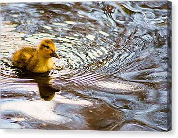 Canvas Print - The Real Rubber Ducky by Kimberly Deverell