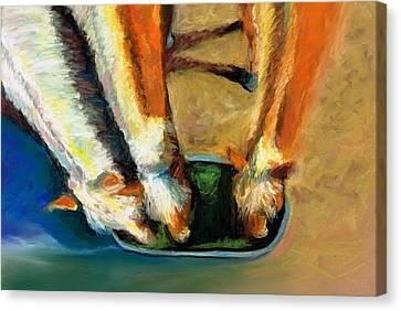 Three Palominos Canvas Print by Frances Marino