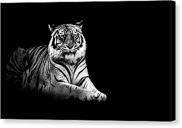 Tiger Canvas Print by Malcolm MacGregor