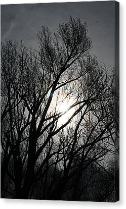Tree Tops Canvas Print by Max Mullins