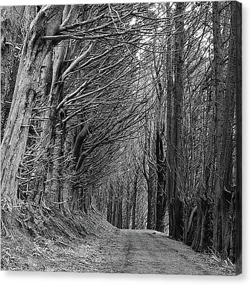 Trees Along Sandymount Track, New Zealand Canvas Print by Atan Chua