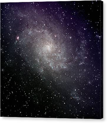 Triangulum Galaxy Canvas Print by A. V. Ley