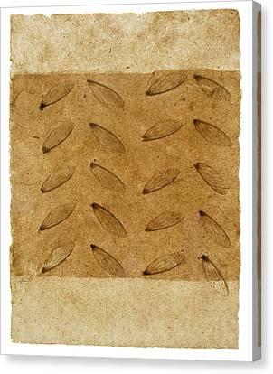 Twenty Wings Canvas Print by Annie Alexander
