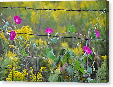 Upon The Fence Canvas Print by Brittany H