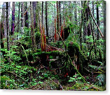 Very Old Forest Canvas Print by Anne Havard