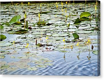 Water Lilies Canvas Print by Sarita Rampersad