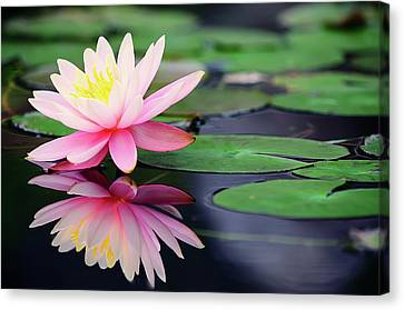 Reflection Canvas Print - Water Lily In Lake by Anakin Tseng