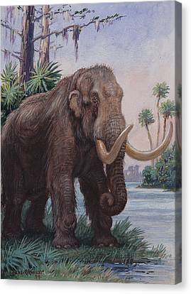 When The Age Of Man Began, The Mastodon Canvas Print by Charles R. Knight