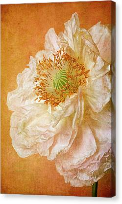 White Double Poppy Canvas Print by © Leslie Nicole Photographic Art