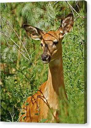 Whitetail Doe Painterly Canvas Print by Ernie Echols