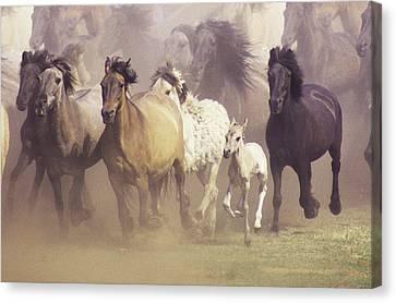 Wild Horses Running Canvas Print by John Foxx
