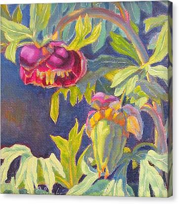 Wild Peony Canvas Print
