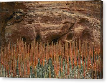 Wildflowers In The Desert Land Of Petra Canvas Print