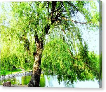 Willow Over Pond Canvas Print