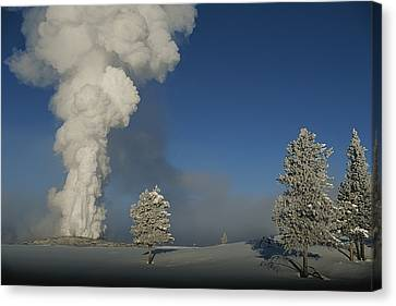 Winter View Of Old Faithful Geyser Canvas Print by Norbert Rosing