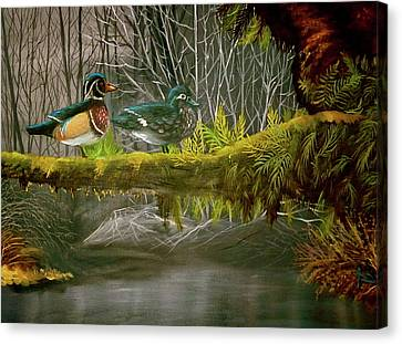 Wood Duck Love Canvas Print