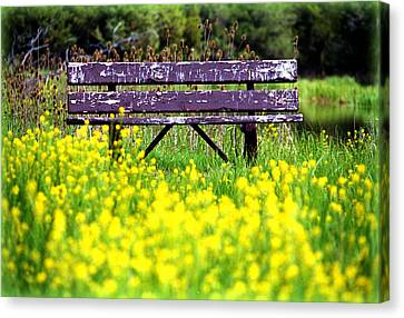 Wooden Bench Canvas Print by Emanuel Tanjala