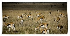 Herd Of Antelope Beach Towel by Darcy Michaelchuk