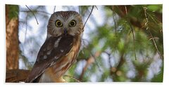 Saw-whet Owl Beach Towel