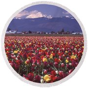 Field Of Tulips And Mount Baker Round Beach Towel