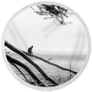 Monkey Alone On A Branch Round Beach Towel by Darcy Michaelchuk