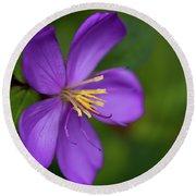 Purple Flower Macro Round Beach Towel