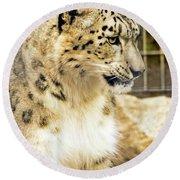 Snow Leopard 1 Round Beach Towel