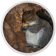 Round Beach Towel featuring the photograph Squirrell by Pedro Cardona