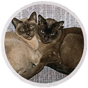 Round Beach Towel featuring the photograph Tonkinese Pals by Sally Weigand