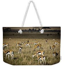 Herd Of Antelope Weekender Tote Bag by Darcy Michaelchuk