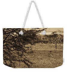Male Lions Snoozing In Shade Weekender Tote Bag by Darcy Michaelchuk