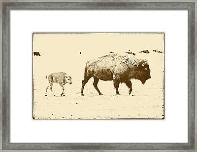 Bison Mother And Calf Framed Print by Melany Sarafis