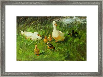 Ducks And Ducklings On A Riverbank Framed Print