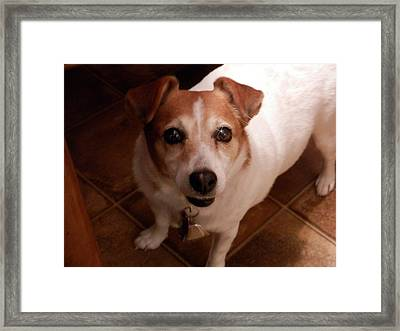 Queen Queenie Framed Print by Angelia Hodges Clay