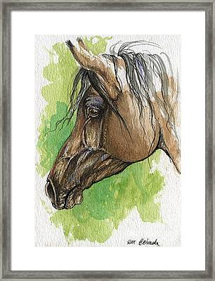The Bay Arabian Horse 20 Framed Print