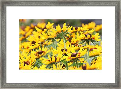 Leader Of The Pack Framed Print by Becky Lodes