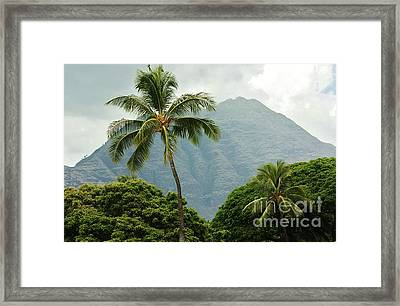 Tropical Splendor Framed Print by Craig Wood