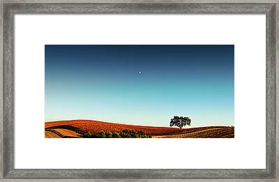 Vineyard Sky Panorama Framed Print by Larry Gerbrandt