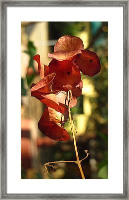 Beauty Of Nature Framed Print by Ankit Changawala