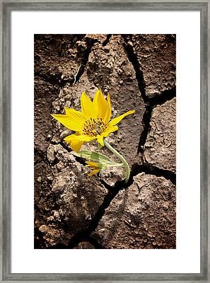 Grow Framed Print by KC Moffatt
