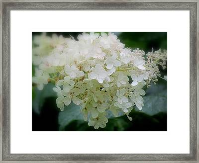 Framed Print featuring the photograph Hydrangea by France Laliberte