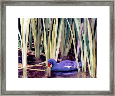 Framed Print featuring the pastel Moorhen by Jan Amiss
