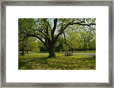 Lake Murray Area Framed Print by Iris Greenwell