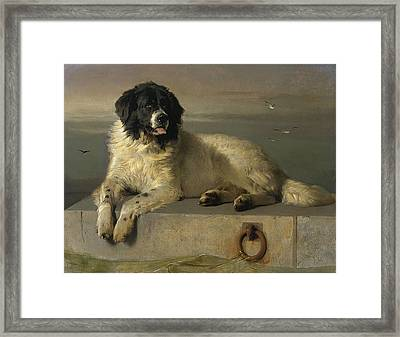 A Distinguished Member Of The Humane Society Framed Print