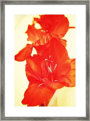 Gladiola Framed Print by Cathie Tyler