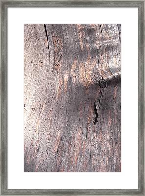 Tree Bark Framed Print by John Foxx